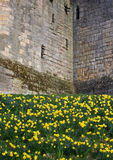 Stone wall texture detail Medieval castle. Stock Image