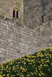 Stone wall texture detail Medieval castle. Royalty Free Stock Image