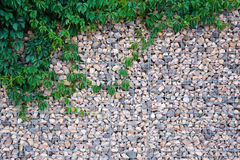 Stone wall texture with green leafs Stock Images
