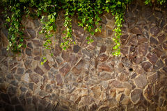 Stone wall texture with vines. Texture of an old stone wall with overhanging vines and vegetation Royalty Free Stock Photography