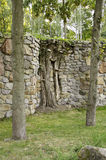 Stone wall and  trees. Stock Image