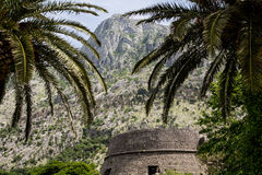 Stone Wall Under Palm Trees in Montenegro Royalty Free Stock Photography