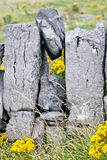 Stone wall and vegetation on Doolin beach, county Clare, Ireland Stock Photos
