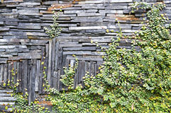 Stone wall with vine Stock Image