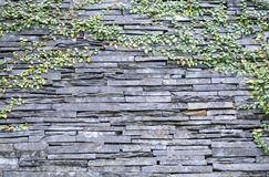 Stone wall with vine Stock Photo