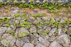 Stone wall and vines Stock Photo