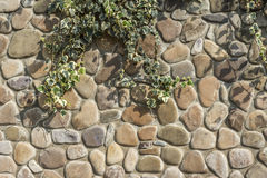 Stone wall on which a plant Stock Photos