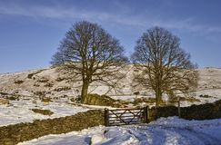 Stone wall in Wintry landscape Royalty Free Stock Photo