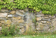 Stone Wall With Ivy Stock Images