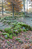 Stone wall in woods Stock Image