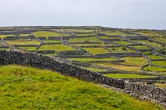 Stone walls in Inisheer, Aran Islands, Ireland. Traditional stone walls in Inis Oirr, Aran Island, Ireland Royalty Free Stock Photos