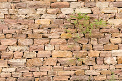 Stone walls, plants royalty free stock images