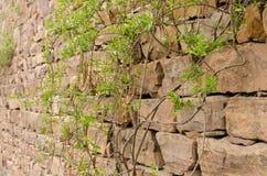 Stone walls, plants royalty free stock photos