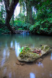 Stone in water. Stone and big tree in waterfall limestone Royalty Free Stock Photography
