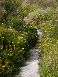 Stone way with yellow flowers on the side Stock Images