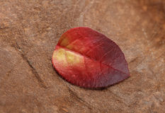 Stone and wilted leaf Royalty Free Stock Photography