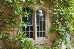 Stone window with climbing plants Stock Photography
