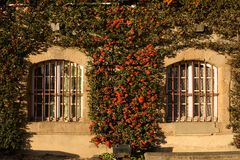 Stone windows with beautiful orange flowers royalty free stock photo