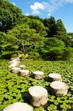 Stone zen path. Zen stone path in a Japanese Garden near Heian Shrine.Stones are surrounded by lotus leaves royalty free stock image