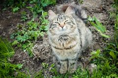 Stoned cat. stray cat enjoying the warm sun. Tabby cat with a sw. Eet face Stock Images