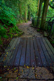 A stoned entrance of Hakone shrine, in the forest in Japan.  Royalty Free Stock Photos
