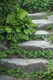 Stoned stair in a japanese garden. Closeup of stoned stair in a japanese garden Royalty Free Stock Photo