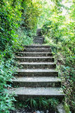 Stoned stairs on the tourist trail in forest. Vertical composition. Seasonal outdoor scene Stock Image