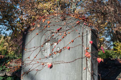 Stoned tomb in cemetery. With autumnal branch of red ivy Royalty Free Stock Photos