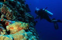 Stonefish ed operatore subacqueo fotografie stock libere da diritti