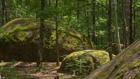 Stonehenge nella foresta stock footage