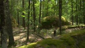 Stonehenge nella foresta video d archivio