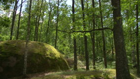 Stonehenge nella foresta archivi video