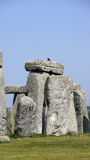 Stonehenge stone with bird Royalty Free Stock Photo
