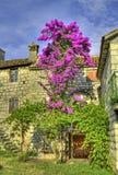 Stonehouse e árvore velhos na flor. Foto de Stock Royalty Free