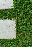 Stonepath med gräs Arkivfoto
