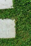Stonepath z trawą Zdjęcie Stock