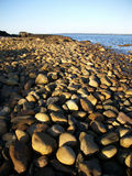 Stones. Beach of stones along Penobscot Bay, Lincolnville, ME Royalty Free Stock Photos
