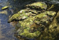 Stones. Of a small creek in Ketchikan, Alaska stock photos