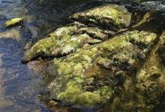 Stones. Of a small creek in Ketchikan, Alaska Stock Photos