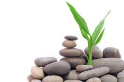 Stones Royalty Free Stock Image