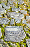 Stones of an ancient path and moss Stock Photography