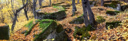 Stones in autumn forest Royalty Free Stock Image