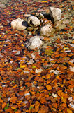 Stones and autumn leafs in the water of a lake Stock Photo