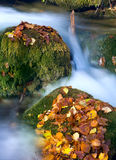 Stones in autumn stream Royalty Free Stock Photo