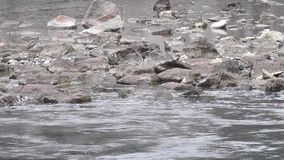 Stones in the Background of a River stock footage