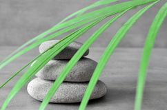 Stones balance and plant. Zen and spa concept. Stock Image