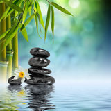 Stones and Bamboo on the water. With narcissus flower royalty free stock photo