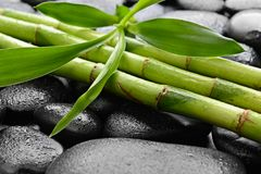 Stones and bamboo Stock Image