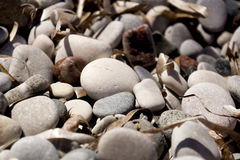 Stones on the beach. Gray pebbles on the beach stock photos
