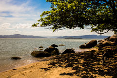 Stones on the beach. Landscape of stones and trees on the beach Royalty Free Stock Photography